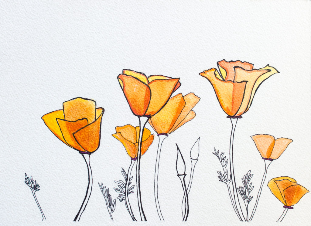 California Poppy Ink and Acrylic Drawing on Paper Allyson Kramer