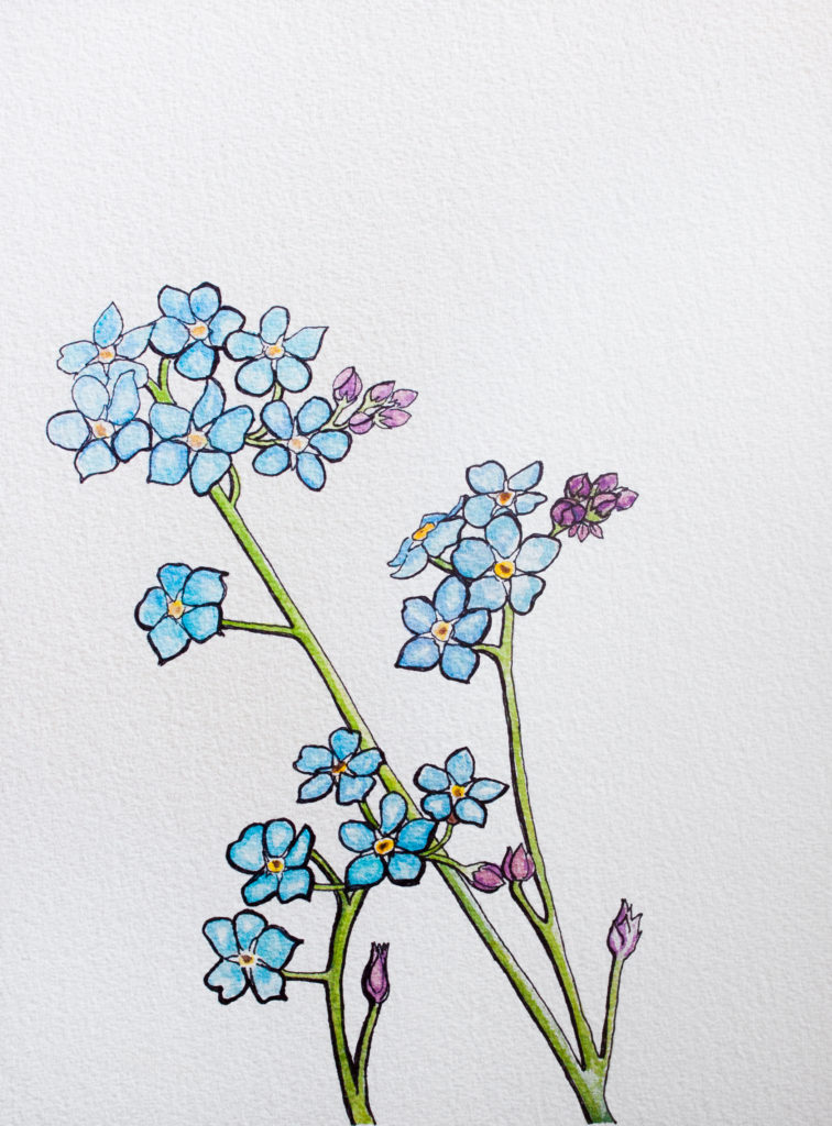 Forget Me Not Ink and Acrylic Drawing on Paper Allyson Kramer