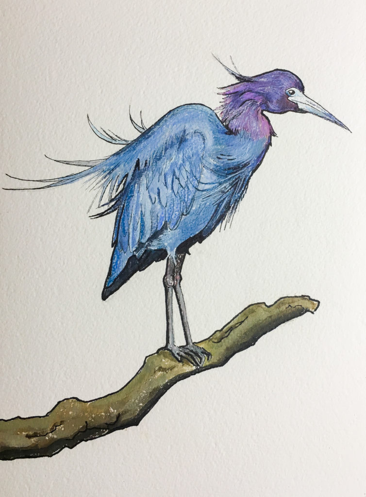 Little Blue Heron Ink, Acrylic and Pencil on Paper Allyson Kramer