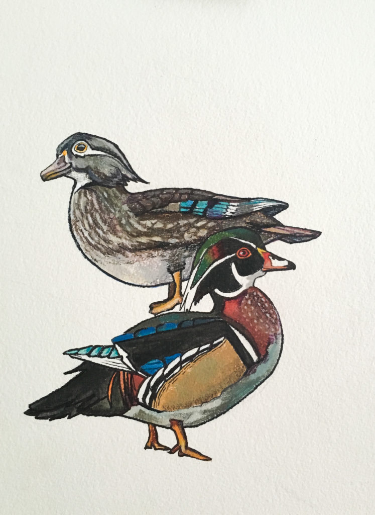 Wood Ducks Acrylic and Ink on Paper Painting Allyson Kramer
